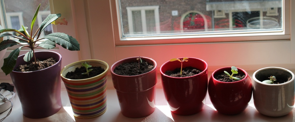 plants on windowsill cropped