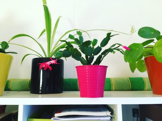 Federica flower